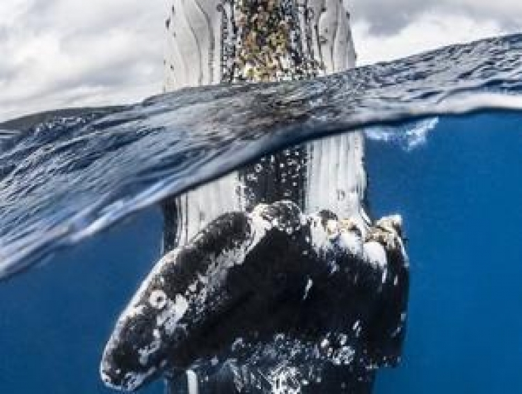 Фотоконкурс «Подводный фотограф года»