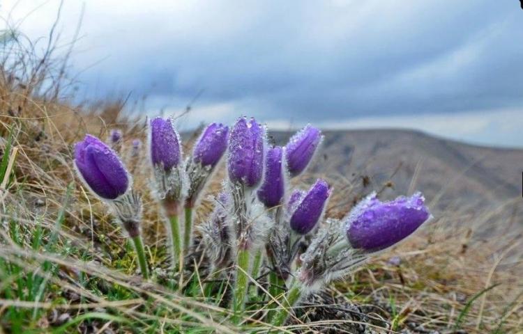 Фототур «Цветы и скалы Тавриды. Апрельский Крым»
