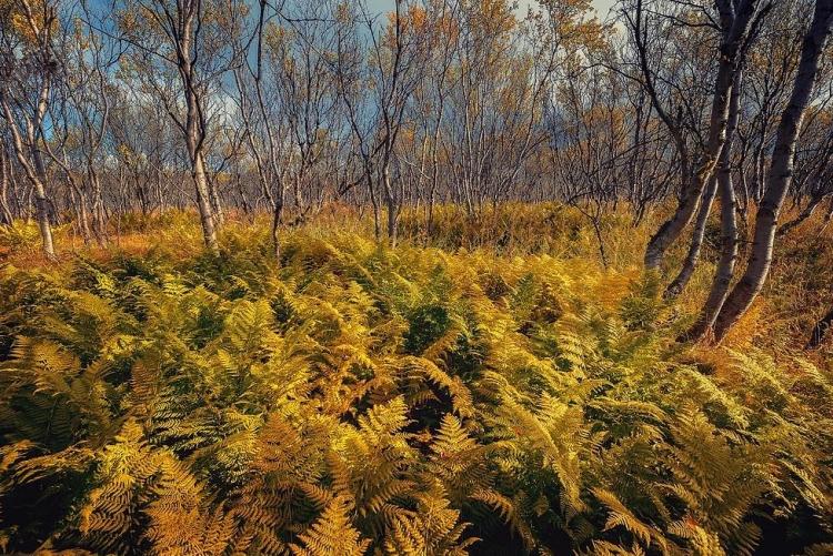 Фототур «Осенние краски Кольского полуострова»