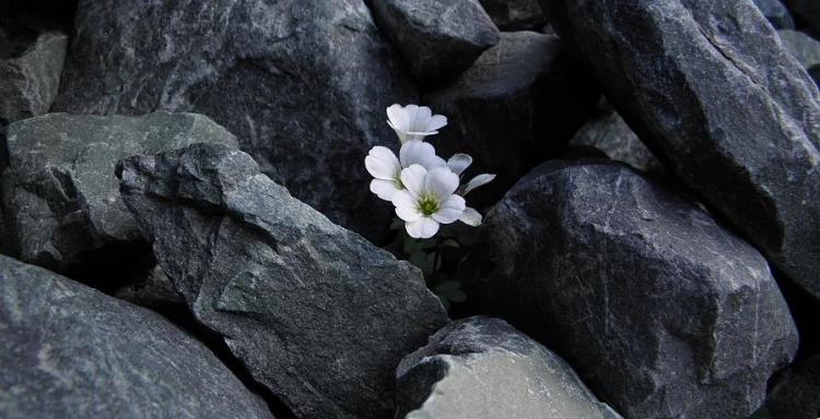 Фотоконкурс «Живая природа Алтая»