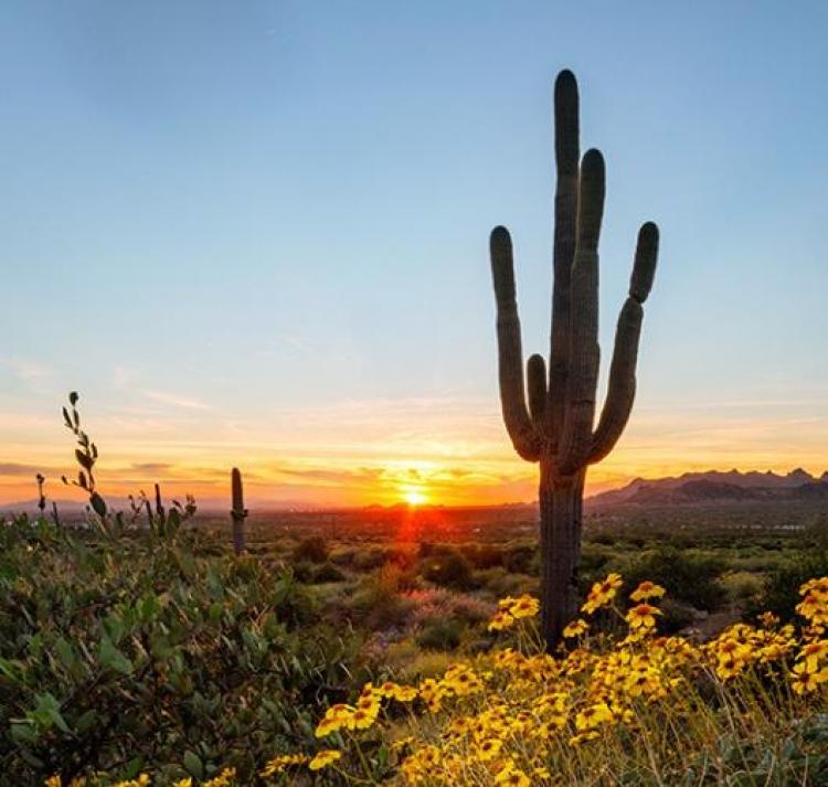 Фототур «Цветущие пустыни Аризоны»
