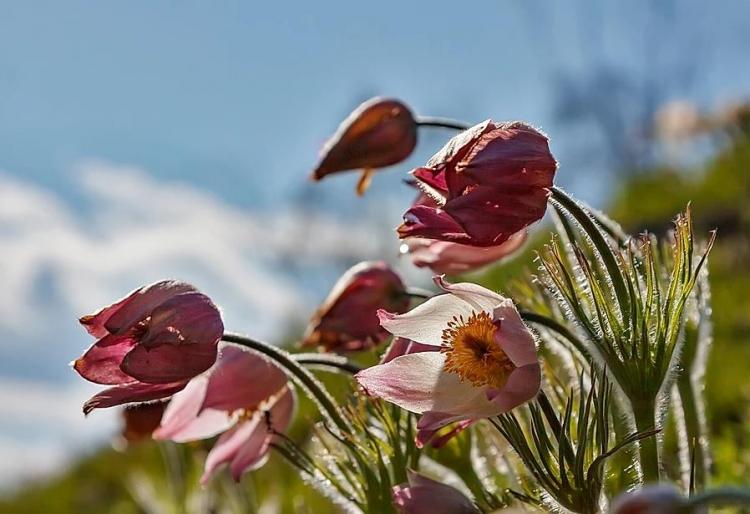 Фототур «Майское цветенье»