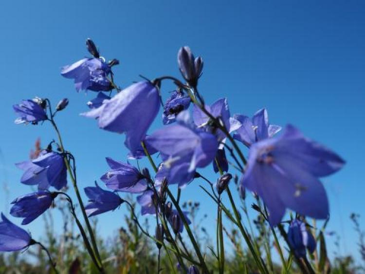 Фотоконкурс «Цветы мира»