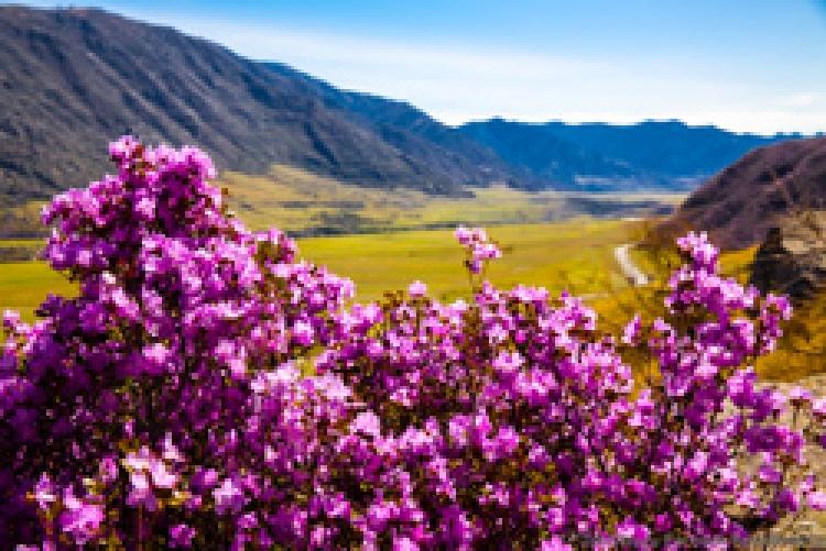 Фототур «Цветущий Алтай»