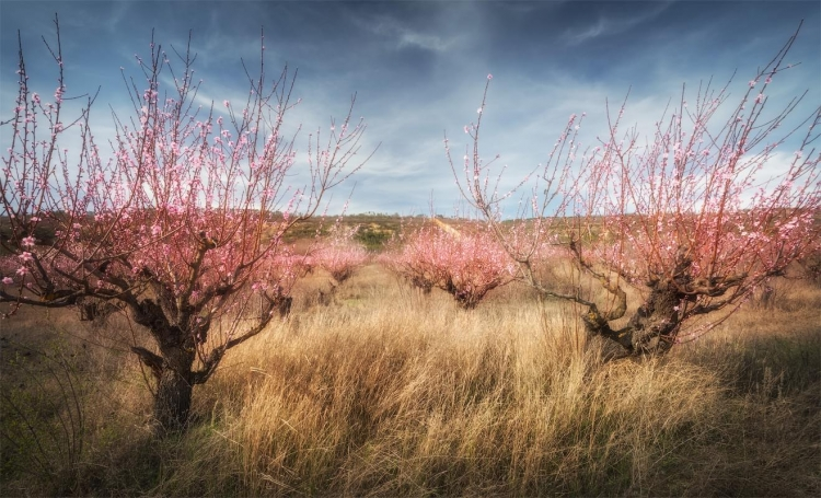 Фототур «Цветущий Крым»