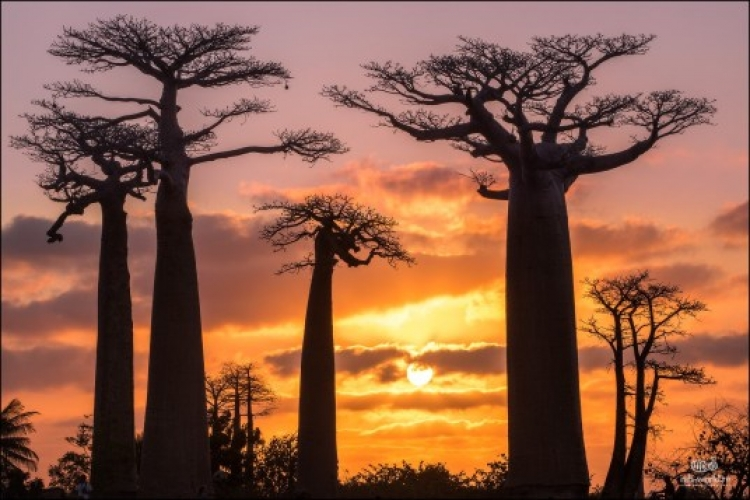Фототур на Мадагаскар «Рифовые скалы Цинги и аллея баобабов»