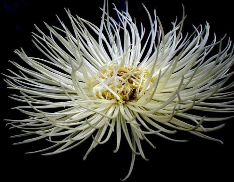 Фотоконкурс «Белые цветы»
