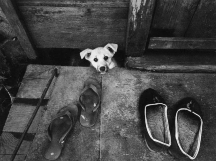 Виртуальная выставка Анатолия Болдина «100 фотографий»