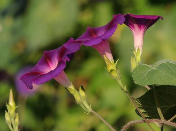 Фотоконкурс «Прекрасные цветы»