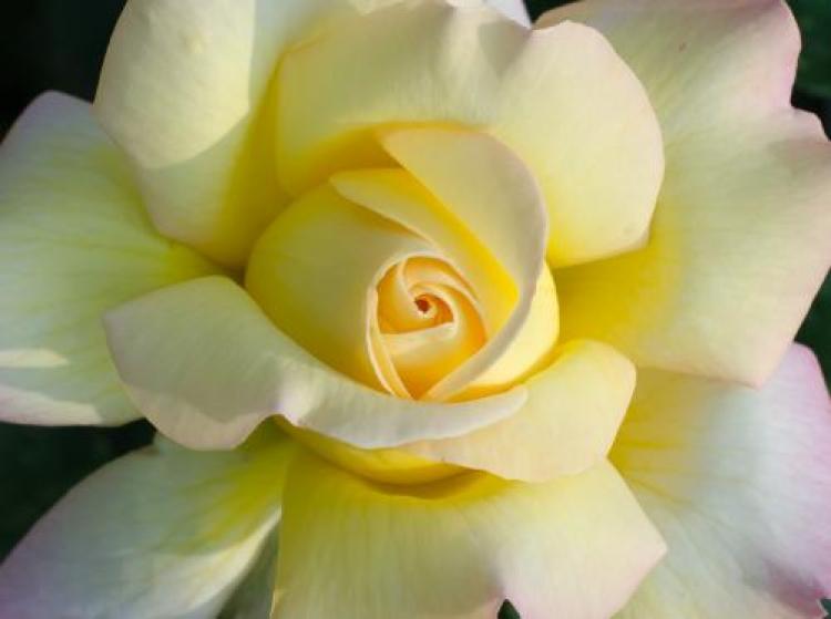 Фотоконкурс «Любимые осенние цветы»