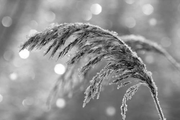 Фотоконкурс «Красивые чёрно-белые фотографии»