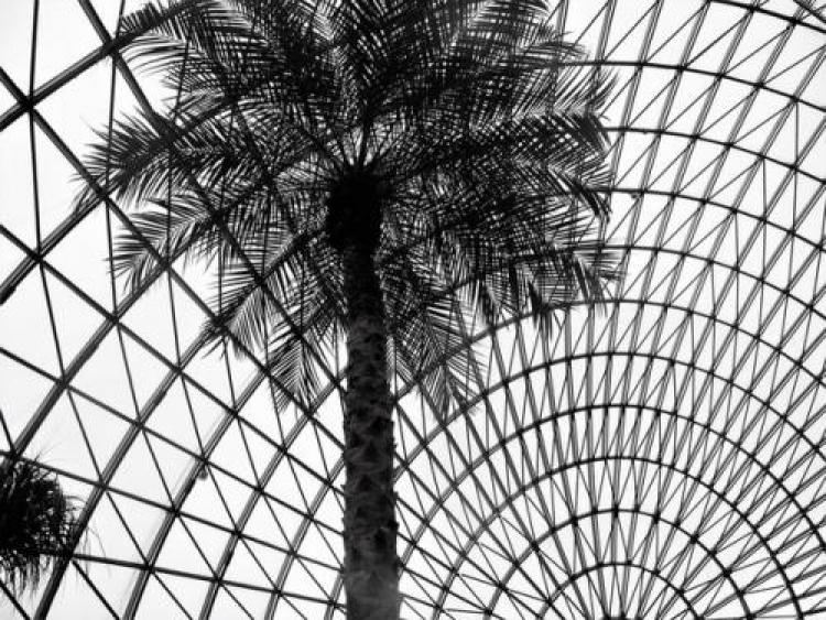 Фотоконкурс «Красивые монохромные фотографии»