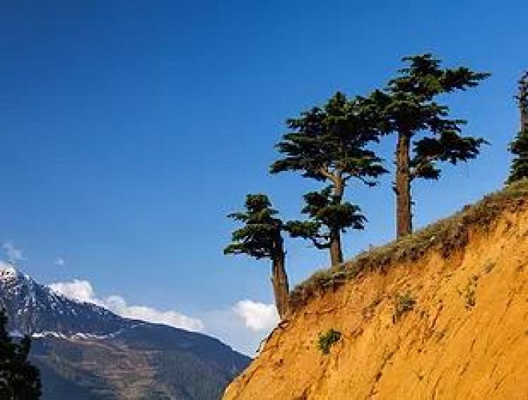 Фототур «Цветущие Гималаи»