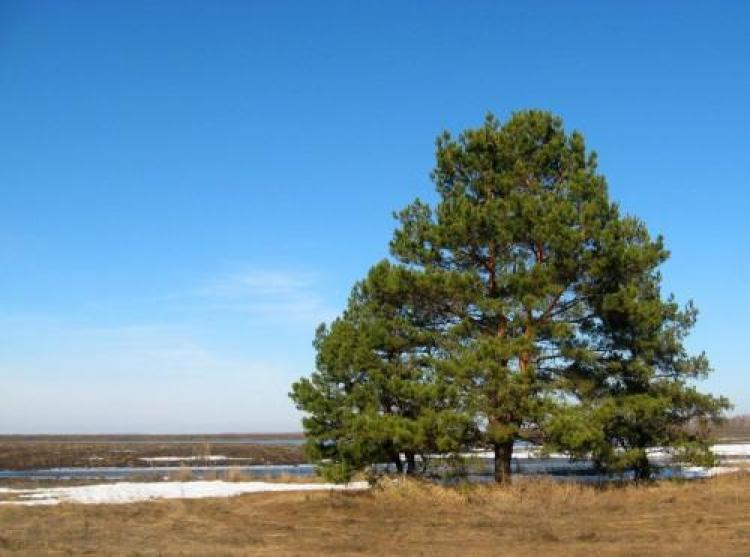 Фотоконкурс «Любимое дерево»