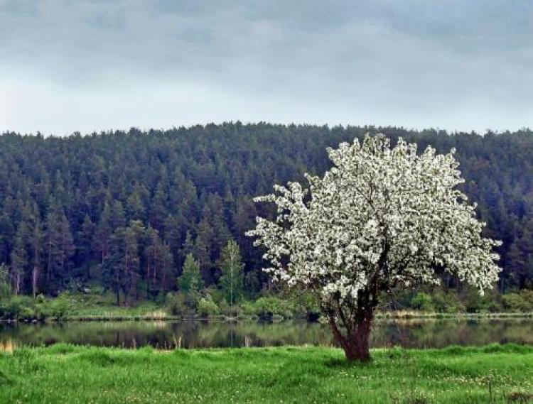 Фотоконкурс «Красивое дерево»