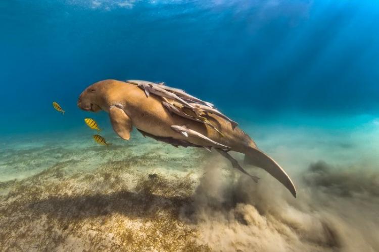 Фотовыставка «Дикий подводный мир»