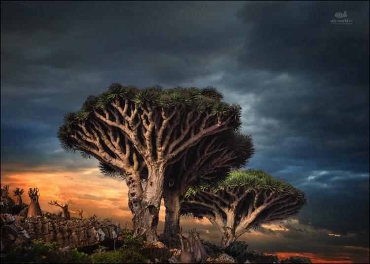 Фототур «Остров драконовых деревьев»