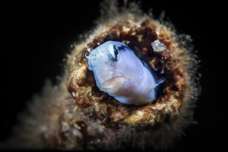 VII Фестиваль подводной фотографии «Дикий подводный мир» им. Д.Виноградова
