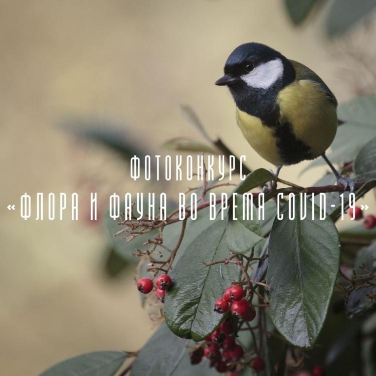 Фотоконкурс «Флора и фауна во время COVID-19»
