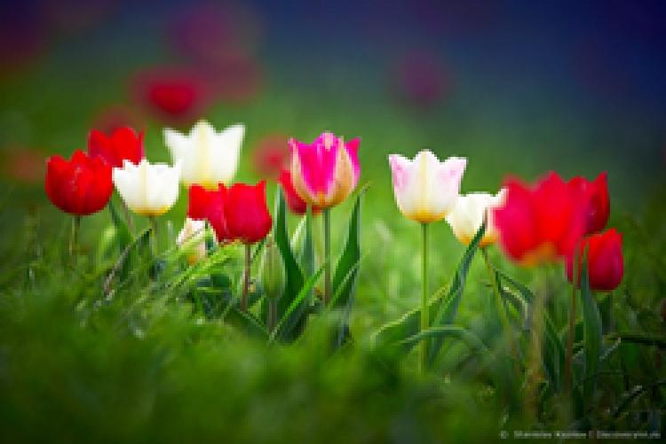 Фототур «Калмыкия: Цветение тюльпанов»