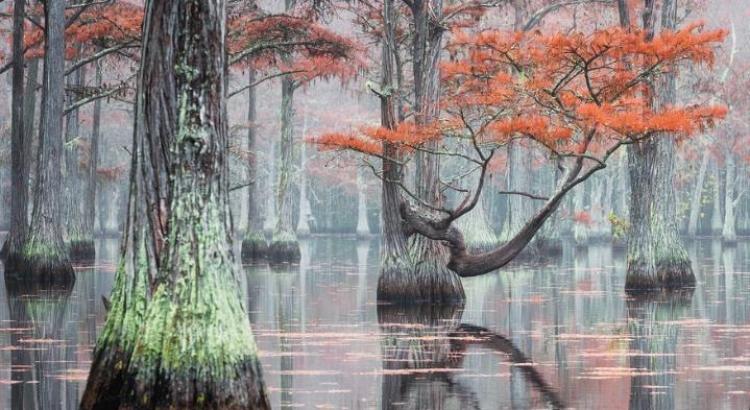 Фототур «Осенняя магия Кипарисовых болот»