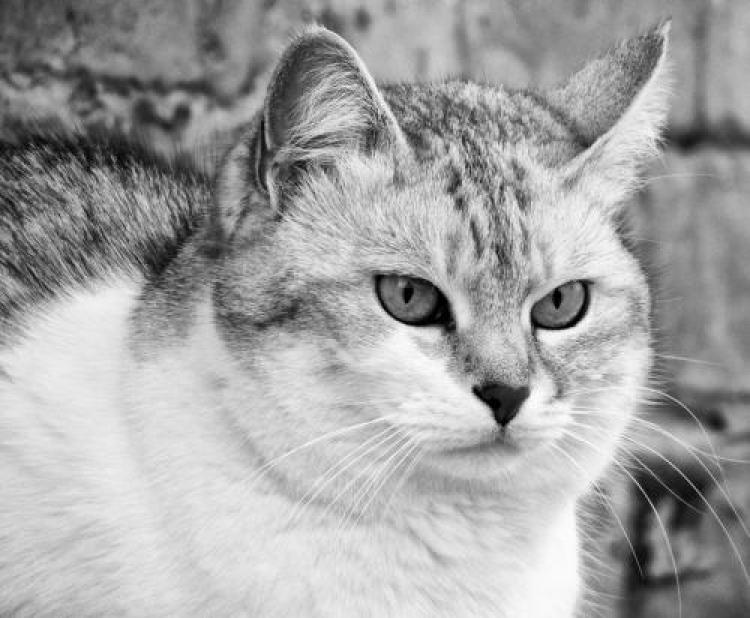 Фотоконкурс «Красивые кошки»