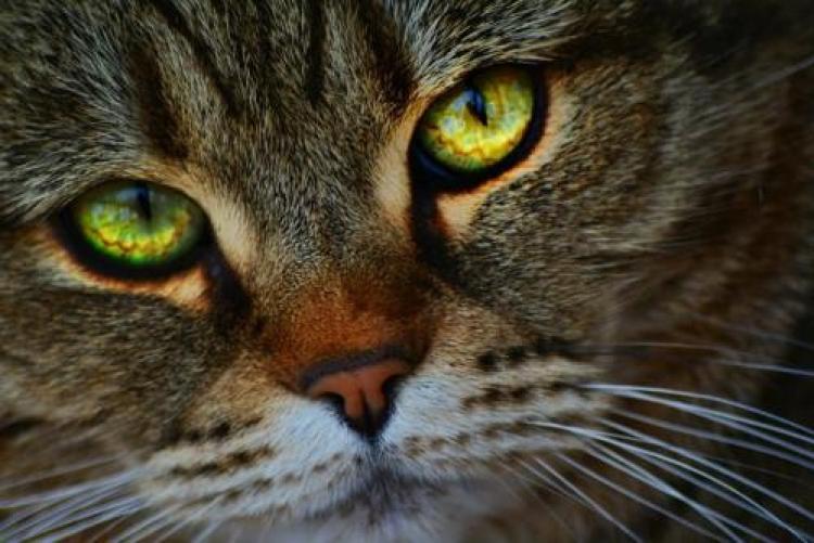 Фотоконкурс «Глаза кошки»