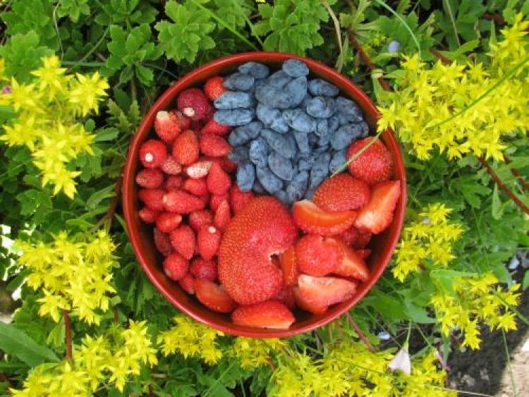 Фотоконкурс «Красивые фрукты иягоды»