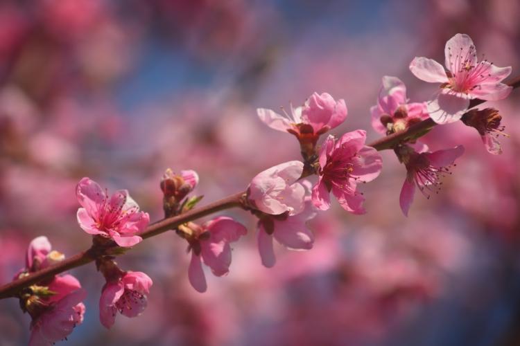 Фототур «Крымский цвет»