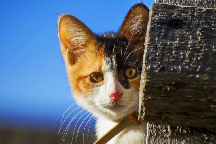 Фотоконкурс «Кошки икотята»
