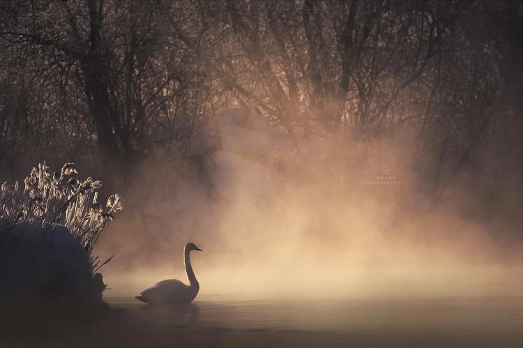 Фототур «Лебединое озеро»