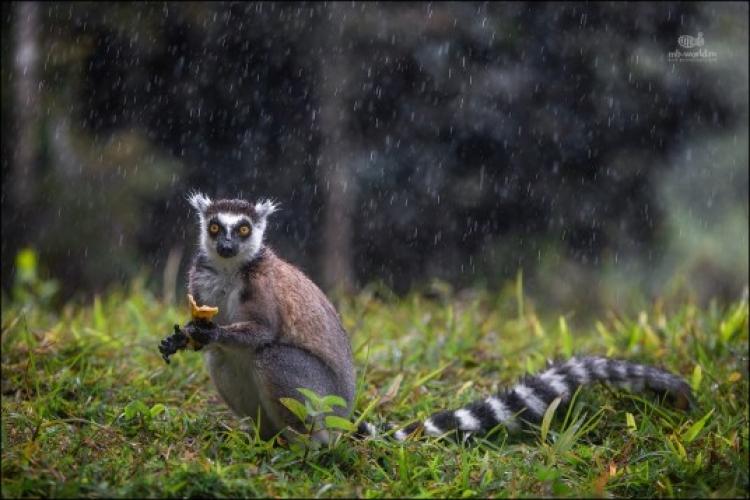 Фототур наМадагаскар «Путешествие в страну лемуров»