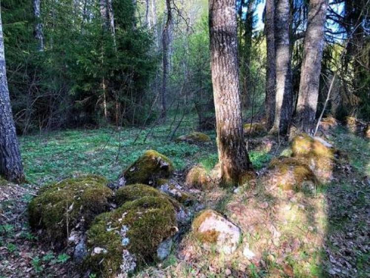 Фотоконкурс «Природа леса»