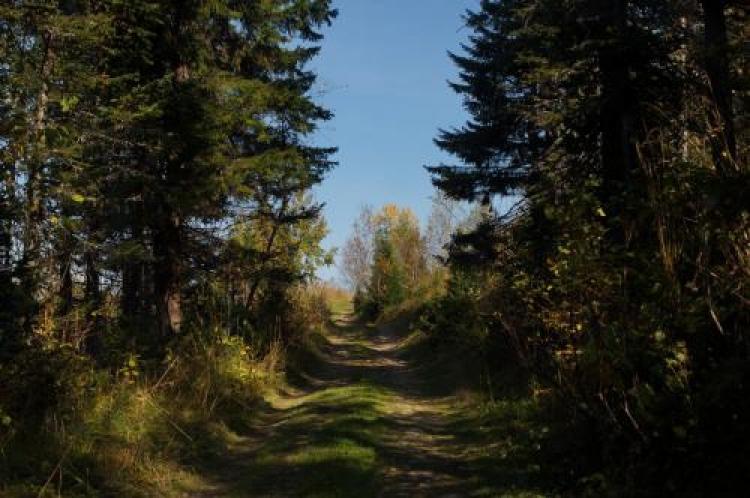 Фотоконкурс «Лес напейзаже»