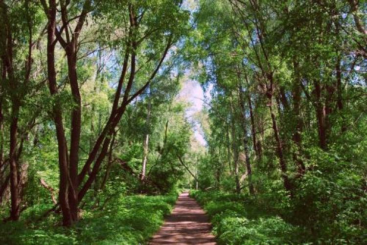 Фотоконкурс «Красивый лес»