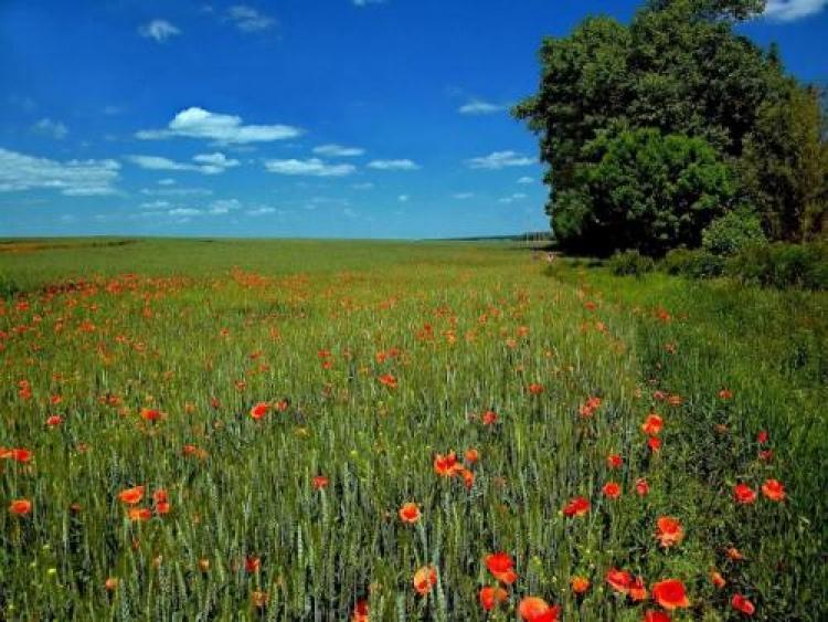 Фотоконкурс «Красоты летнего пейзажа»