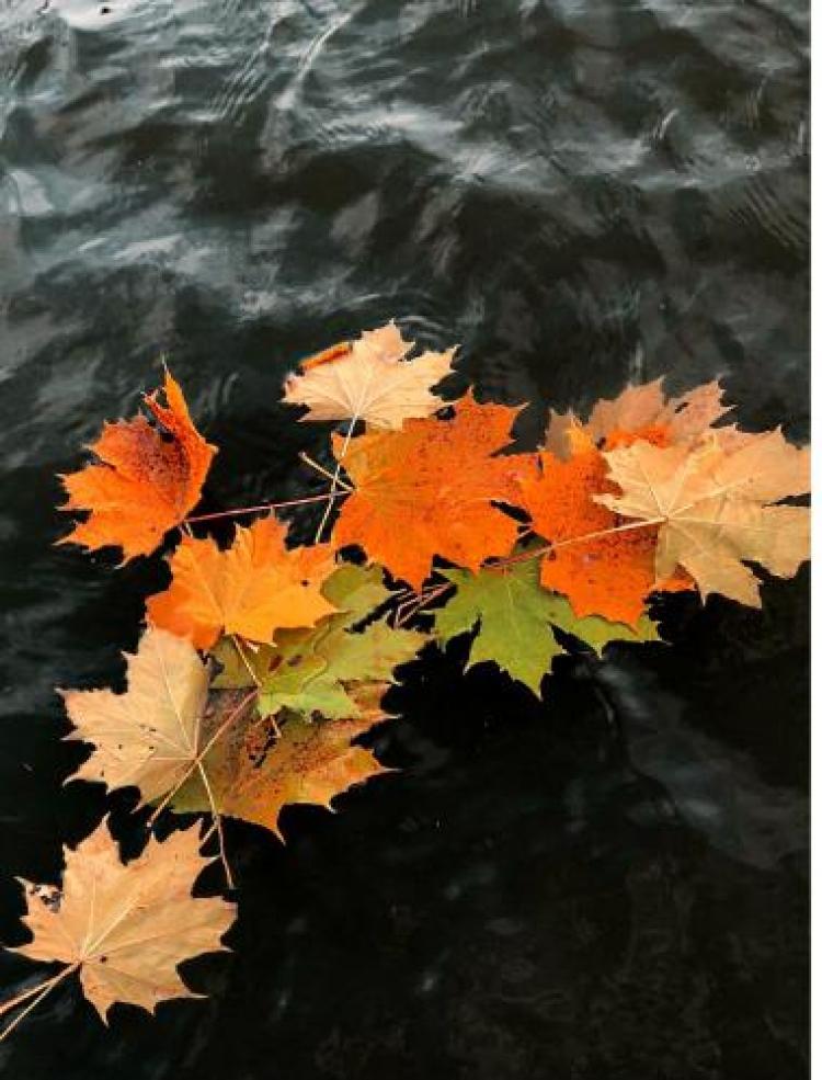 Фотоконкурс «Листья осени»