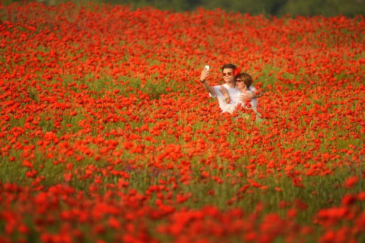 Фототур на цветение маков «Уикенд вКрыму»