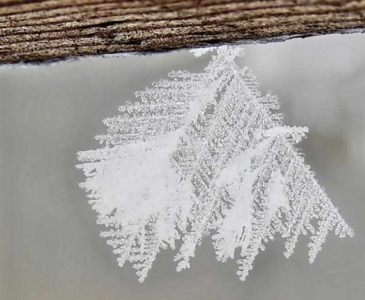 Фотоконкурс «Макросъёмка зимы»