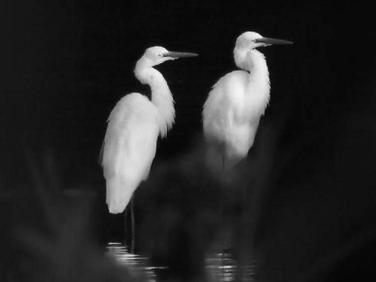 Фотоконкурс «Милые птицы»
