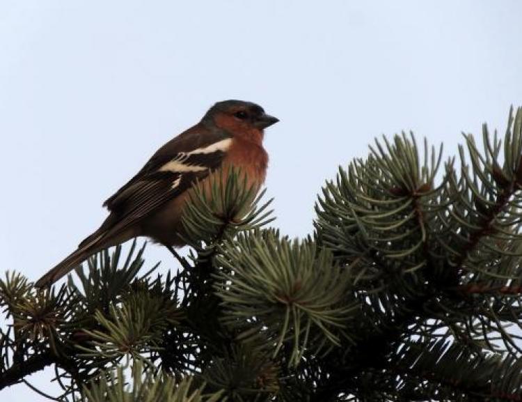 Фотоконкурс «Мир птиц»