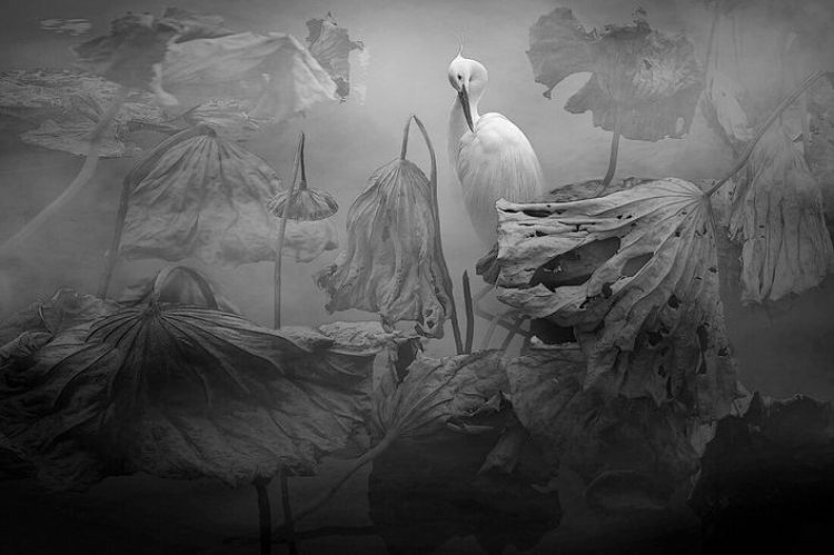 Фотоконкурс «MonoVisions Black & White Photography Awards 2021»