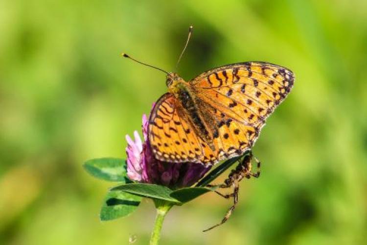 Фотоконкурс «Милые насекомые»