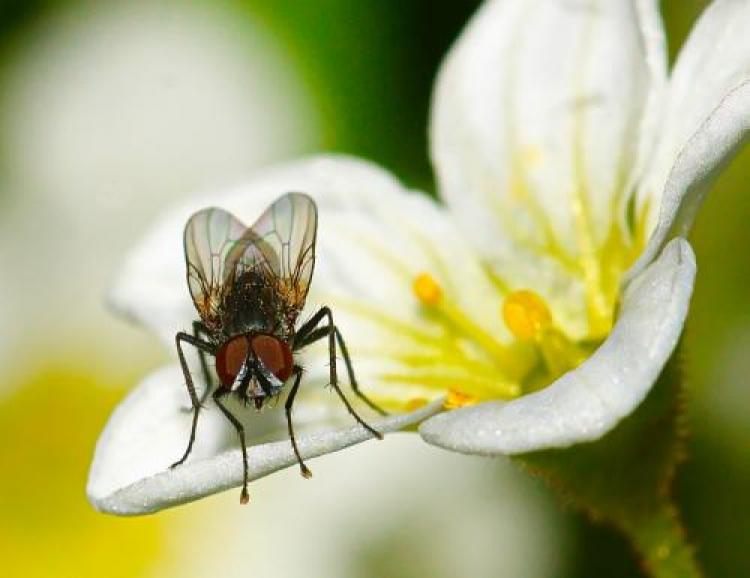Фотоконкурс «Вмире насекомых»