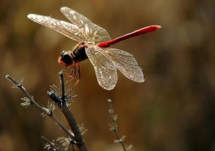 Фотоконкурс «Любимое насекомое»
