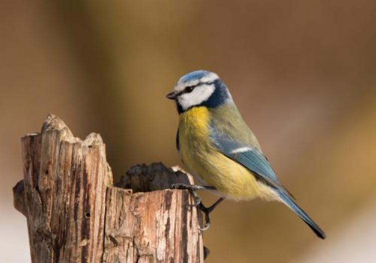 Фотоконкурс «Птички-невелички»