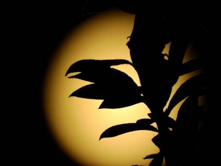 Фотоконкурс «Ночь нафотографии»