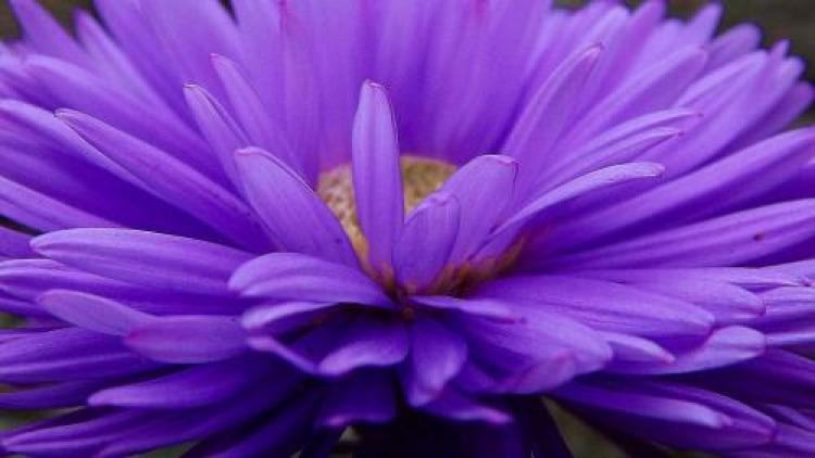 Фотоконкурс «Цветы осени»