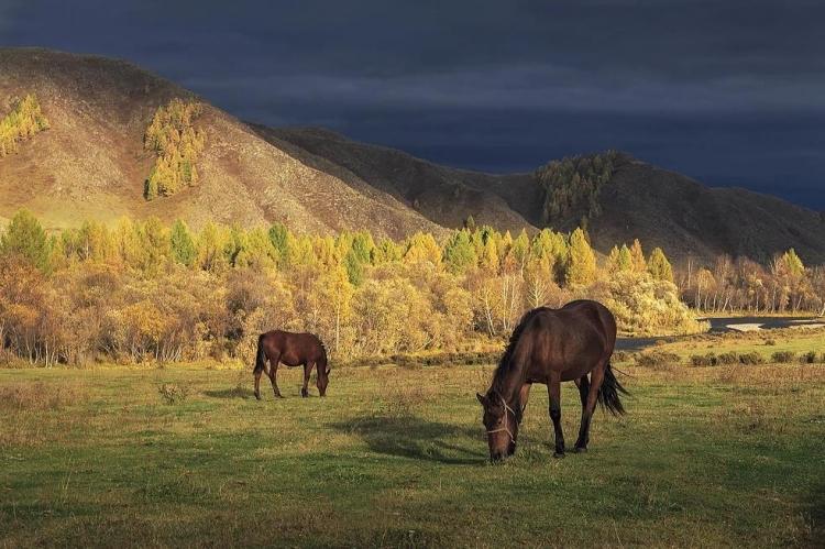 Фототур «Золотая осень наАлтае»