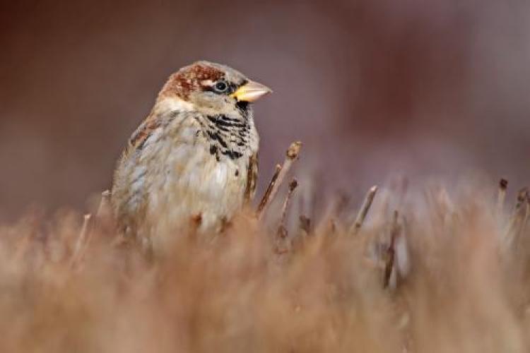 Фотоконкурс «Птицы осенью»